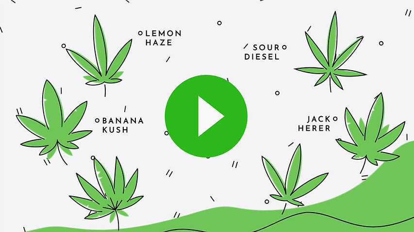 Harvest_Direct_Lacy_Video_Explainer_Thum