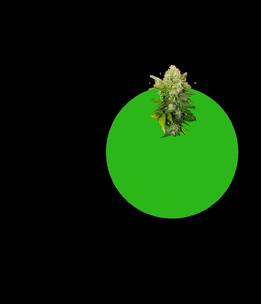 Green-Circle-BG-4.png