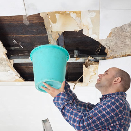 What to Expect - Mold Damage