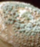 mold-penicillium.jpg