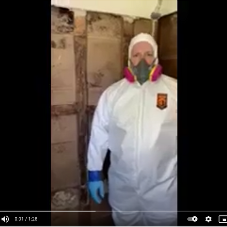 Got Mold? Tri State's Ready to Help!