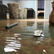How to Avoid Mold & Water Disasters from Heavy Rain and Flooding this Summer