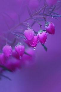Le Bouquet.jpg