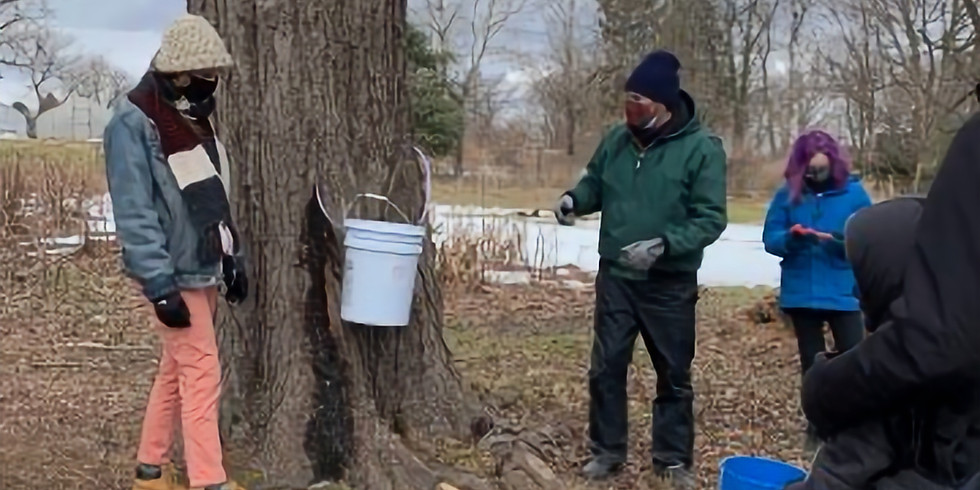 Philadelphia Orchard Project (POP) event featuring Oak Lane Maple