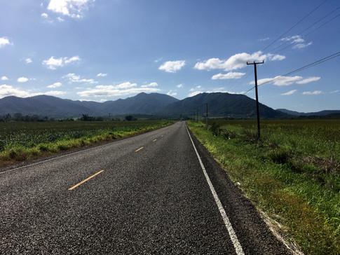 Sur la Hummingbird road