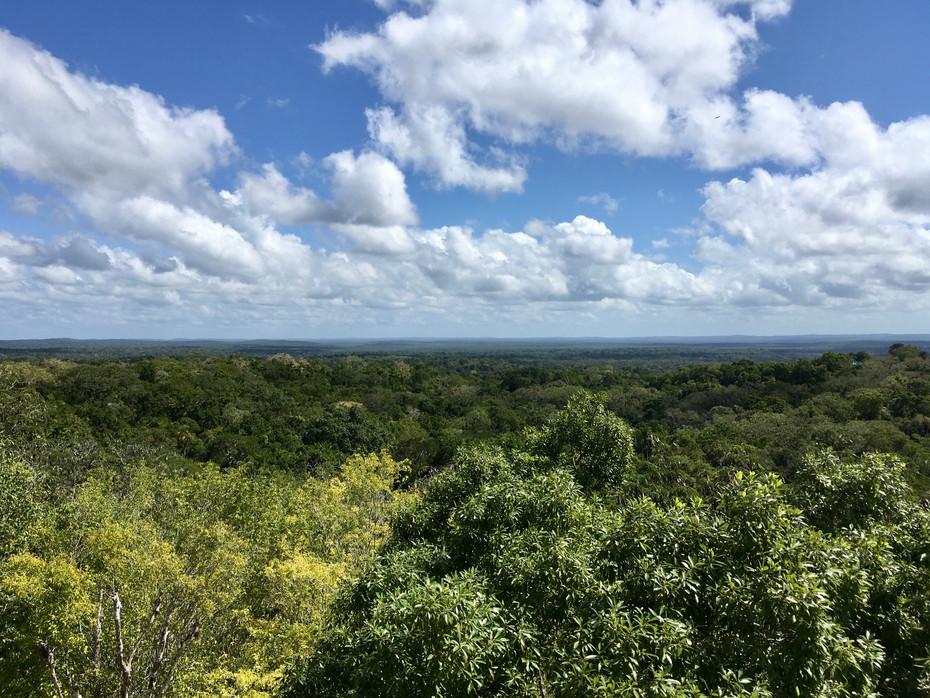 Vue depuis le temple IV sur la forêt de Tikal