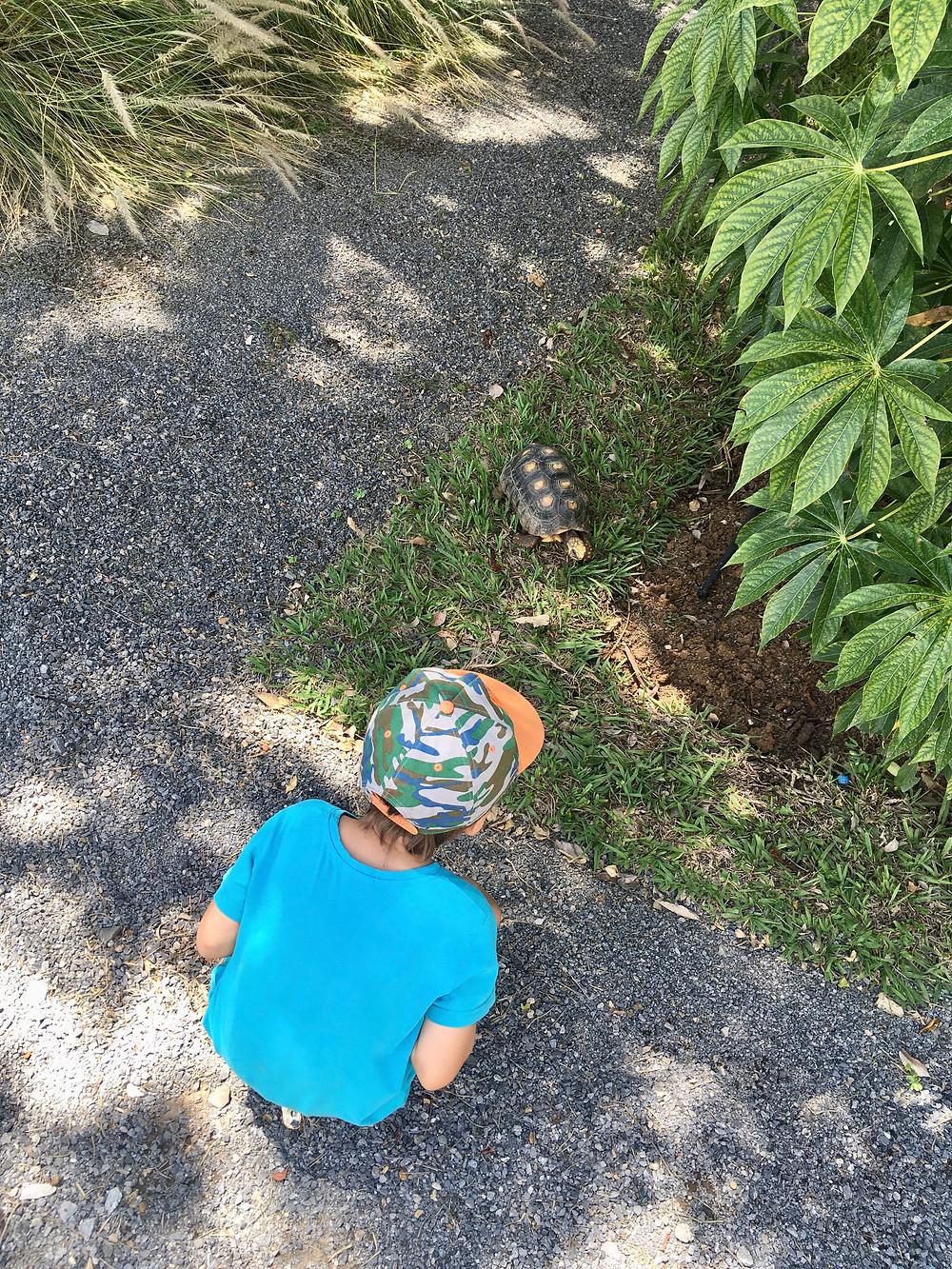 Emilio et la tortue