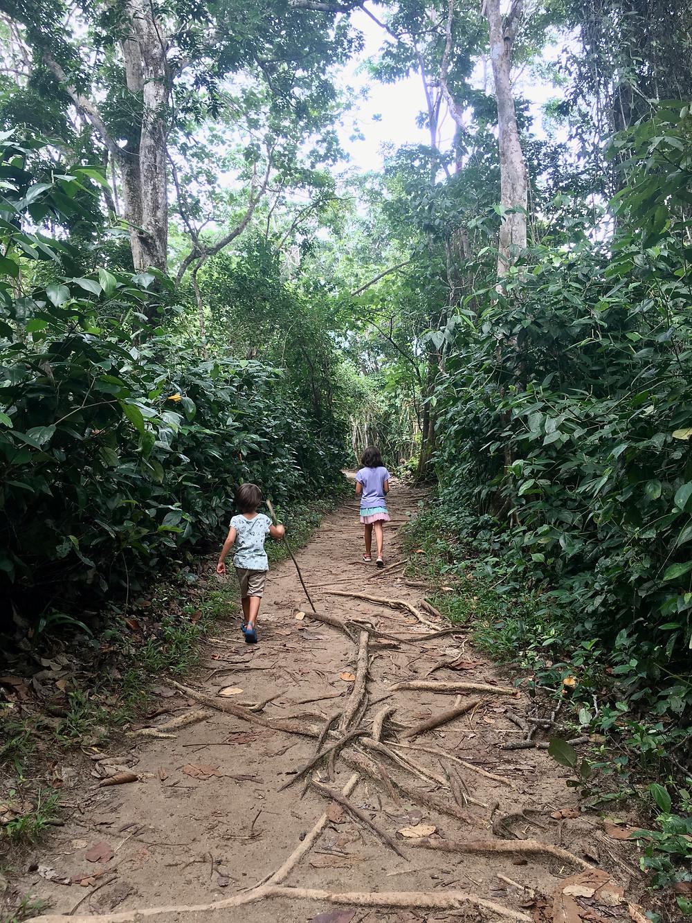 Dans le parc national de Cahuita, côte Caraïbe