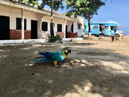 Les perroquets, près de Santa Marta