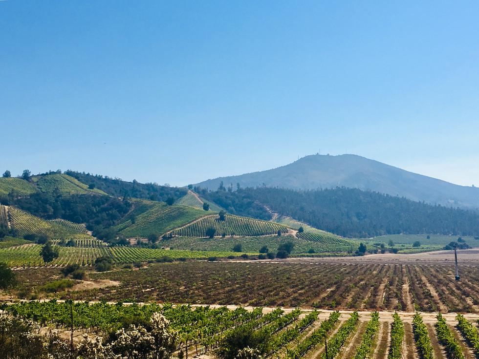sur la route des vignes chiliennes