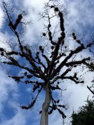 Sur le site de Tikal