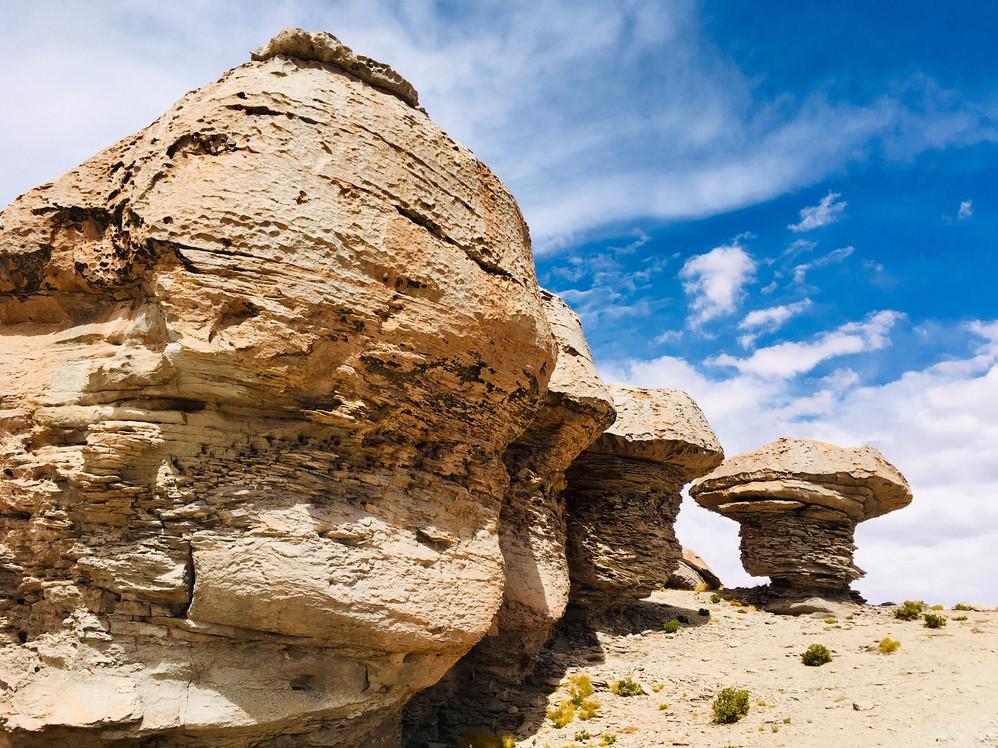 Les arbres de pierre