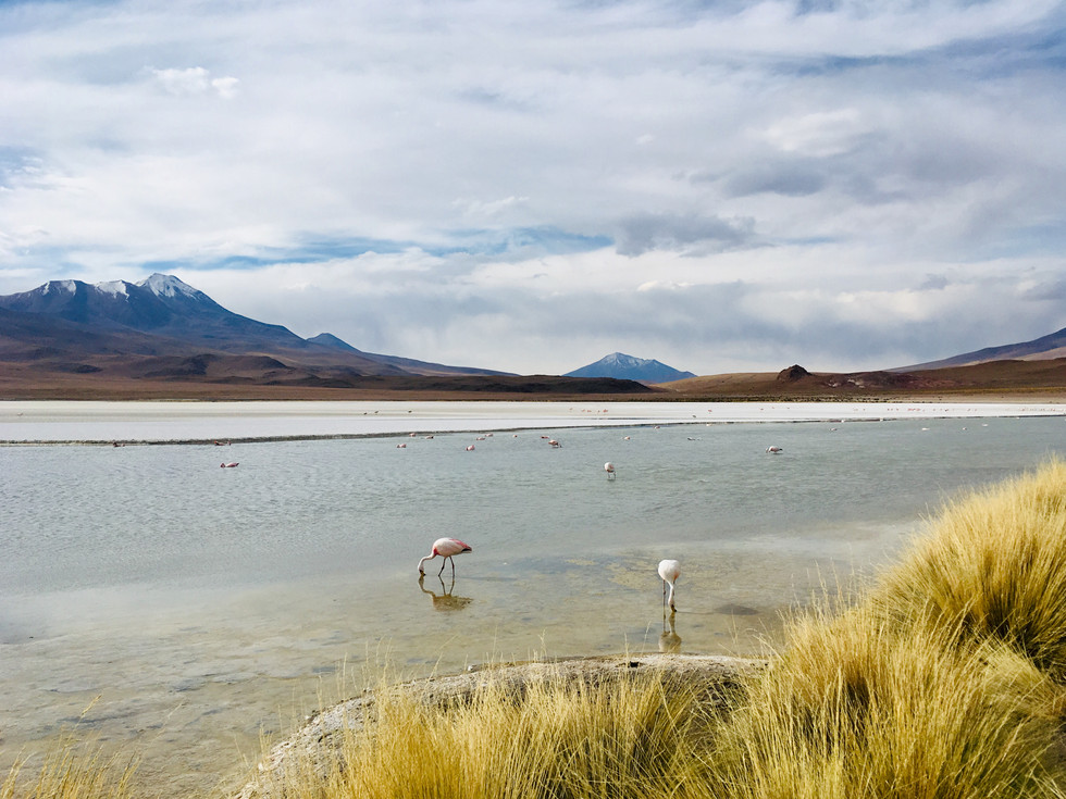 Les flamants de la laguna Hedionda