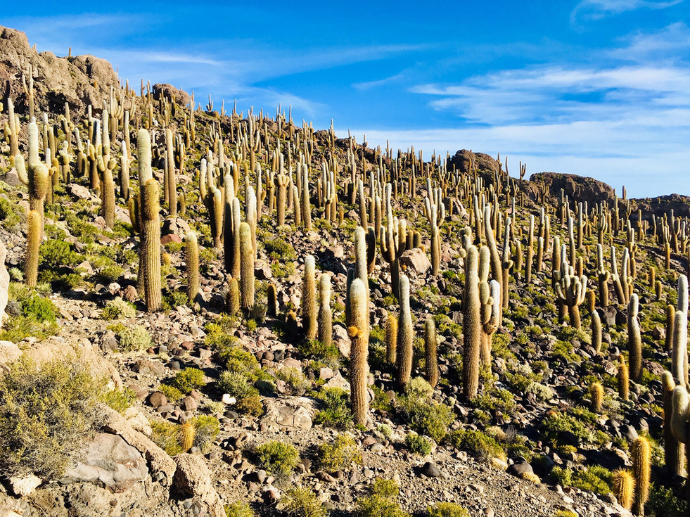 L'île Incahuasi et ses cactus géants