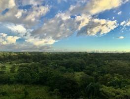 La forêt San Lorenzo