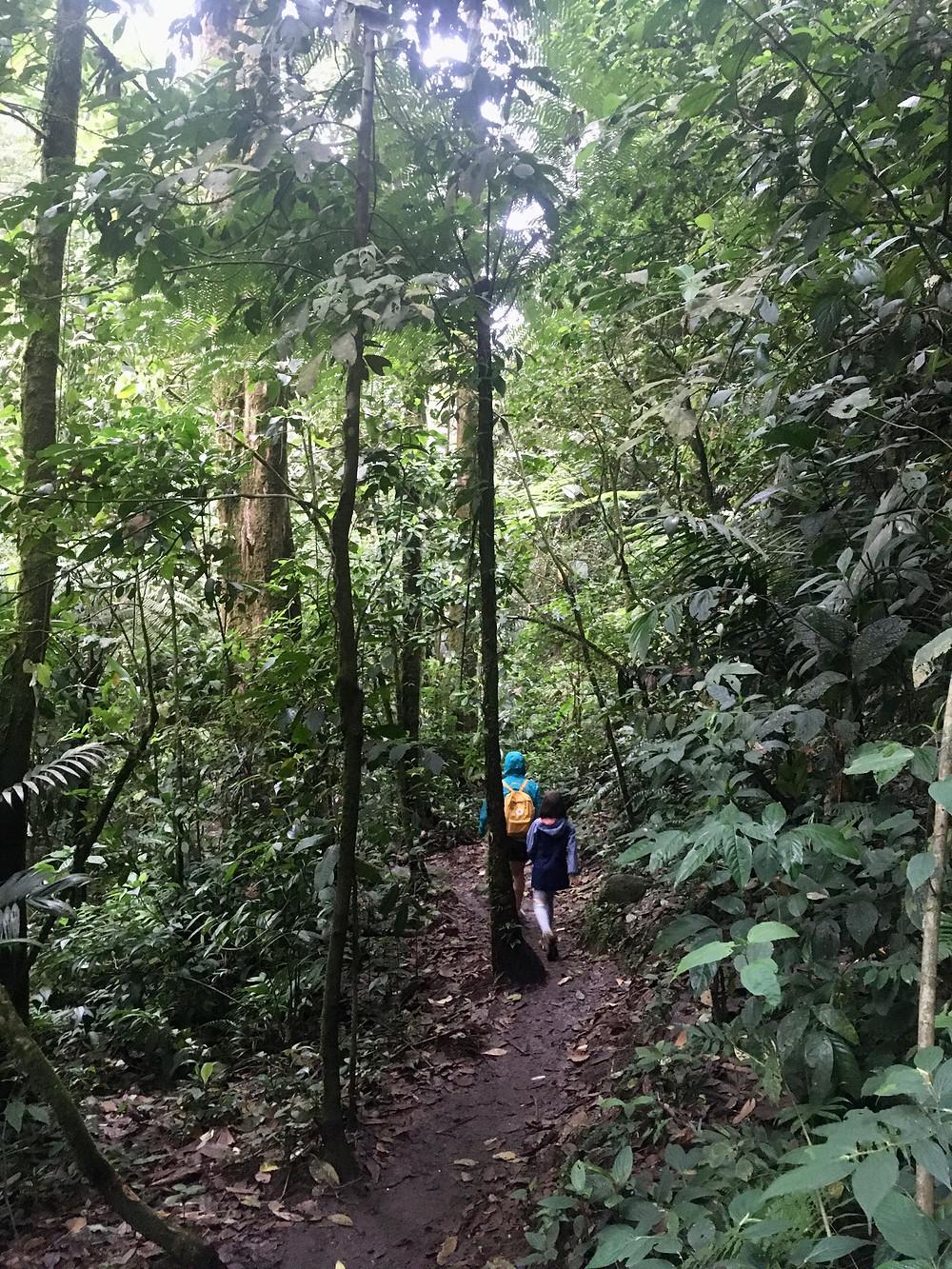 Au coeur de la végétation costaricienne