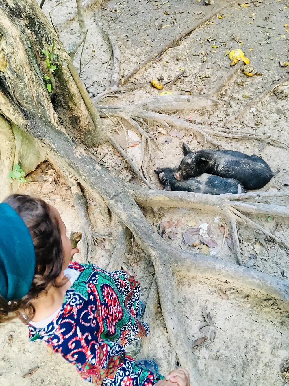 Emilio aimerait caresser les porcines sauvages mais la maman nous surveille de près...