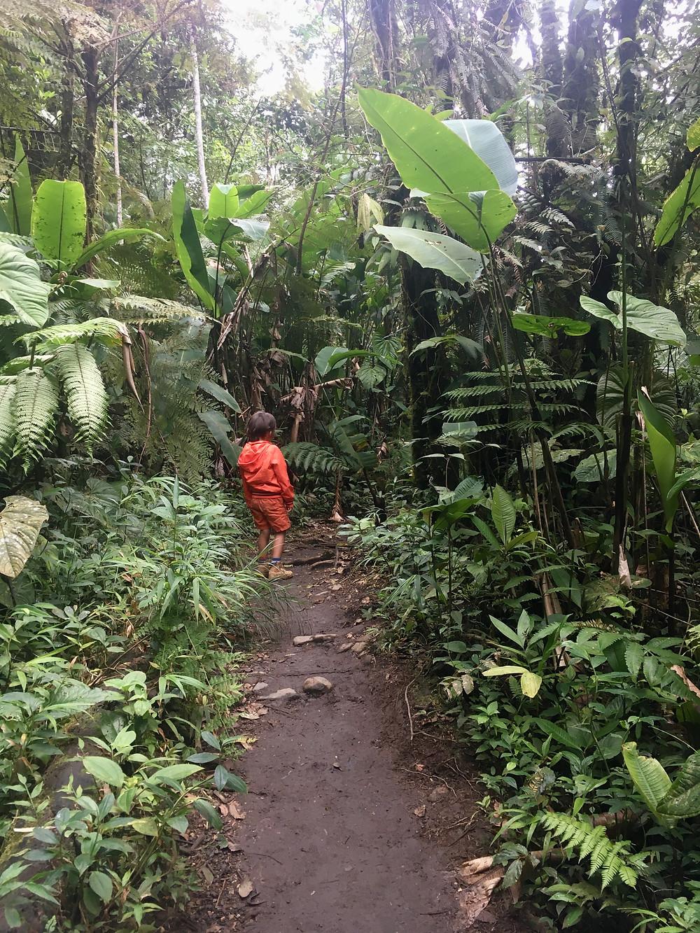 Emilio dans la jungle