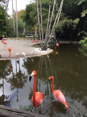 Visite du Flamingo gardens
