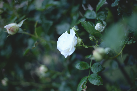 JULICA-8TH-collection-flower-4.png