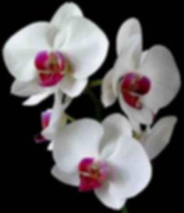 orchid+sales.jpg