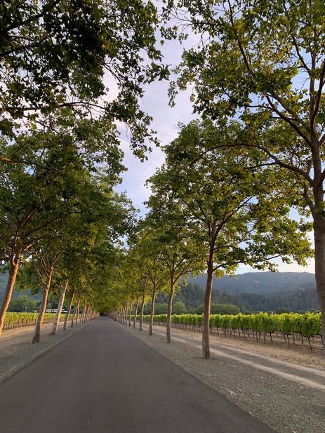 Napa Roads
