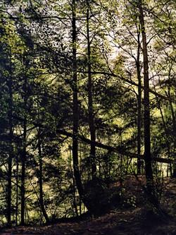 Cummins Falls Park 2 (2)