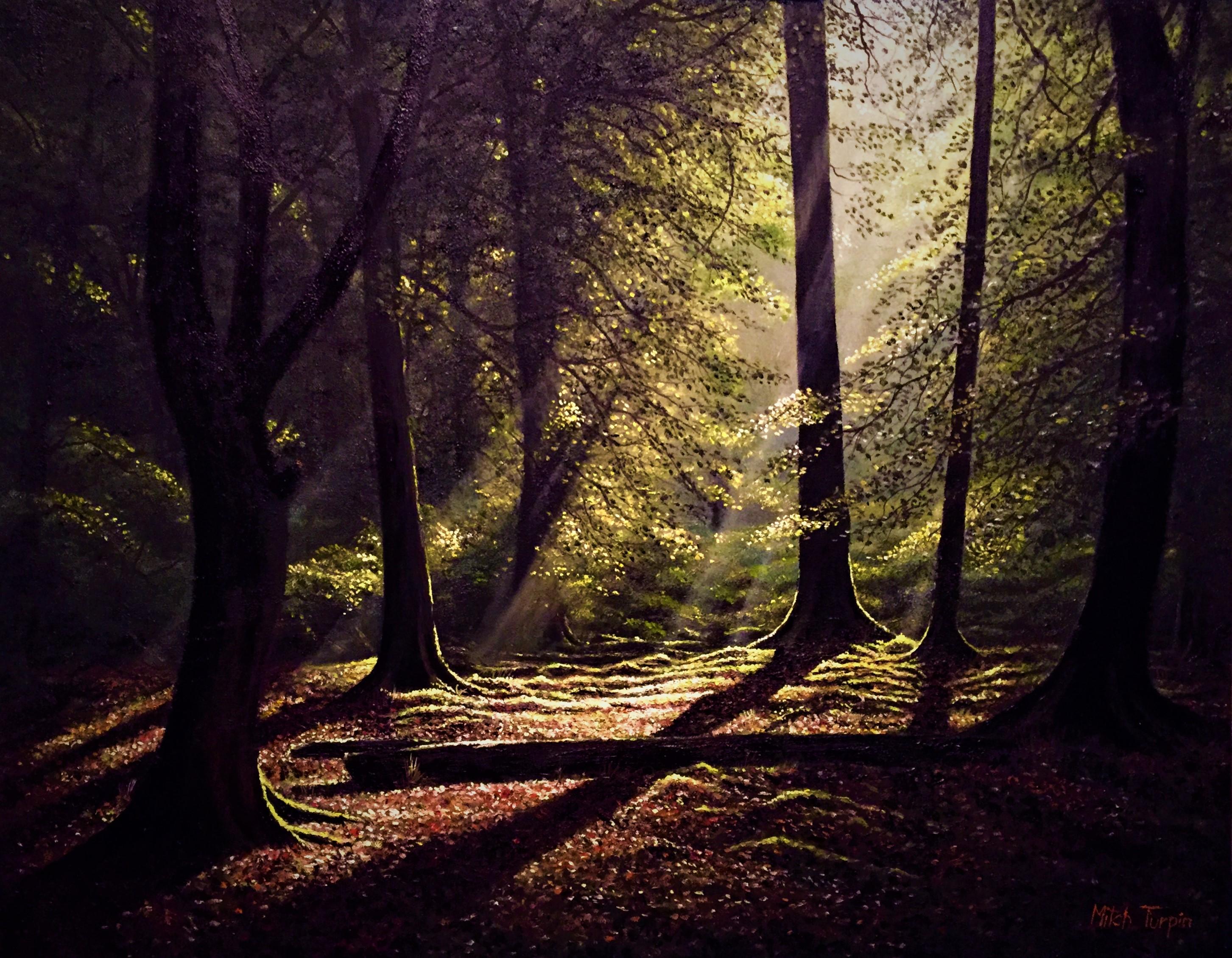 Sunlit Woodland