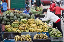 Una buena nutrición, asunto público y arma esencial contra el coronavirus