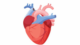 Alimentos fritos relacionados con enfermedades del corazón en mujeres