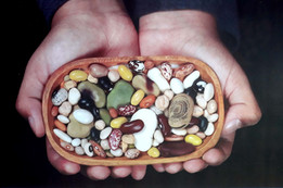 Las leguminosas de grano y su importancia para la salud