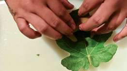 El derecho a la alimentación en el camino a la sostenibilidad