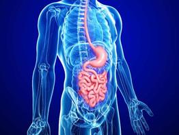 Vida más sana gracias a la microbiota intestinal