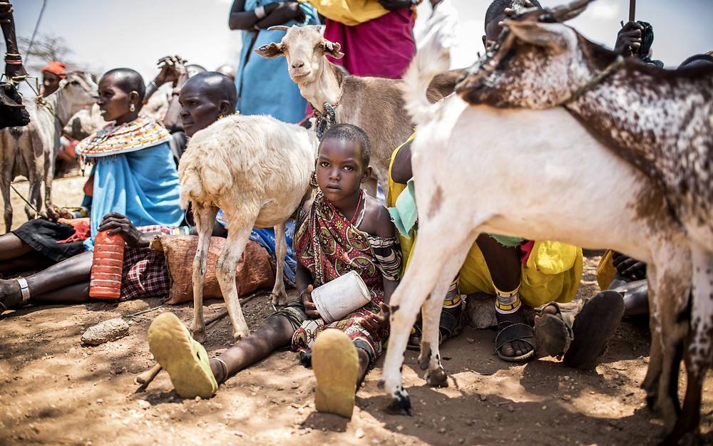 Una comunidad samburu esperando a sacrificar sus cabras en Kenia. ©FAO/LUIS TATO