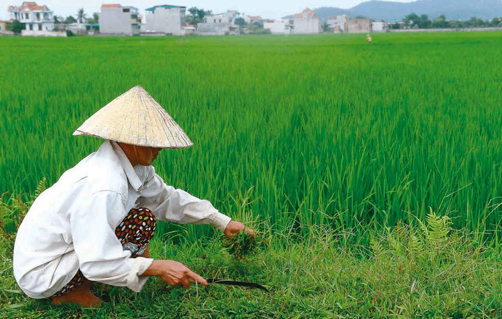 Un agricultor trabaja en un arrozal vietnamita. ©FAO/HOANG DINH NAM
