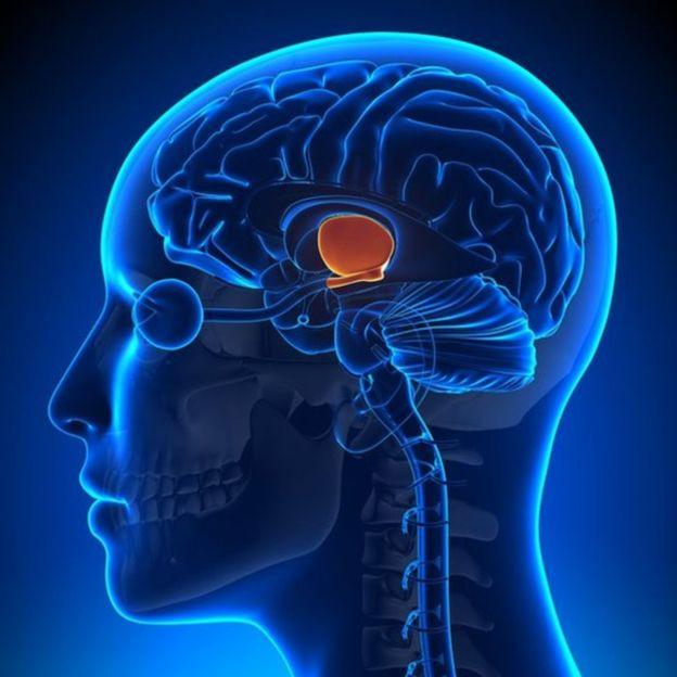 GETTY IMAGES Image caption Los relojes de nuestro cuerpo se mantienen en sincronía a través del núcleo supraquiasmático.