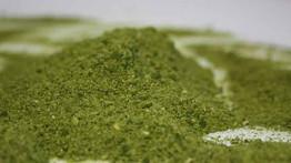 Desarrollan harinas a partir de microalgas con alto valor nutritivo