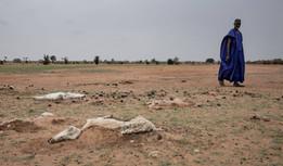 La sequía en Senegal deja a 245.000 personas sin alimento