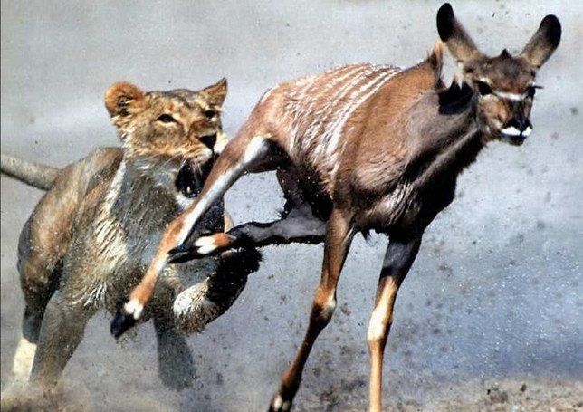 Body Language: Are you a Lion or Gazelle?‏