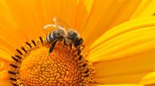 Imprezy pszczelarskie w 2018 roku