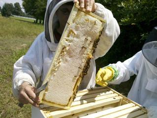 Warsztaty pszczelarskie dla początkujących