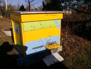 Pierwsze obloty pszczół