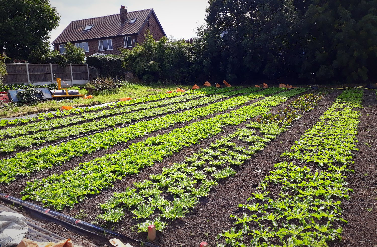 Introduction to Market Gardening