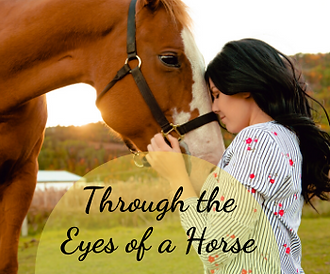 Through the Eyes of a Horse.png