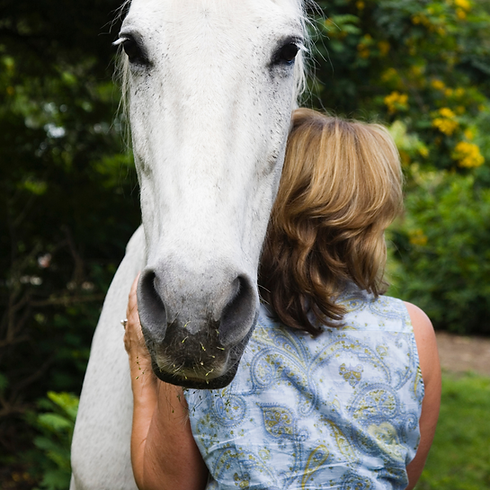 horse hug.png