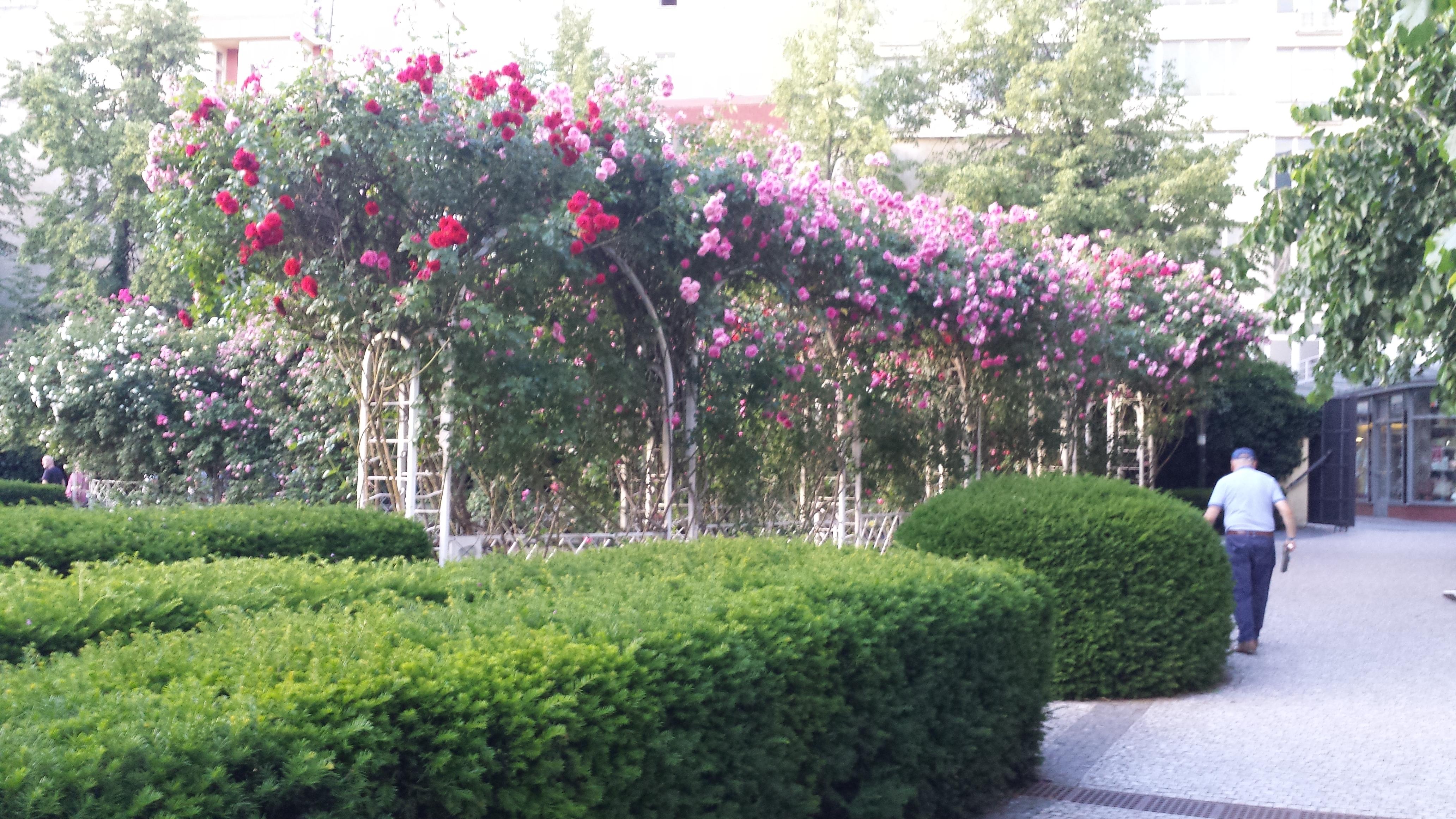Franziskaner Garten #artfarkac