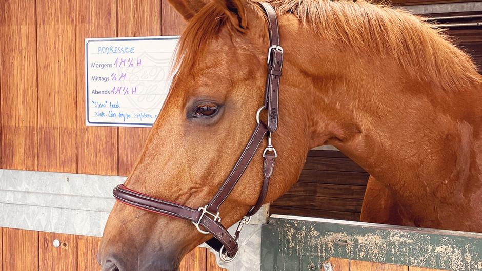 Addressee and Épreuve d'Artiste to Richard Vogel & David Will Equestrian