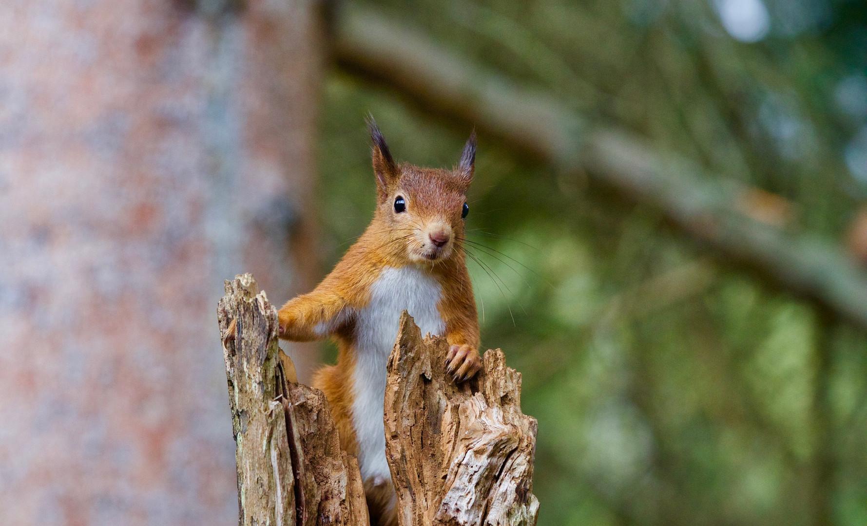 squirrel-2827760_1920.jpg