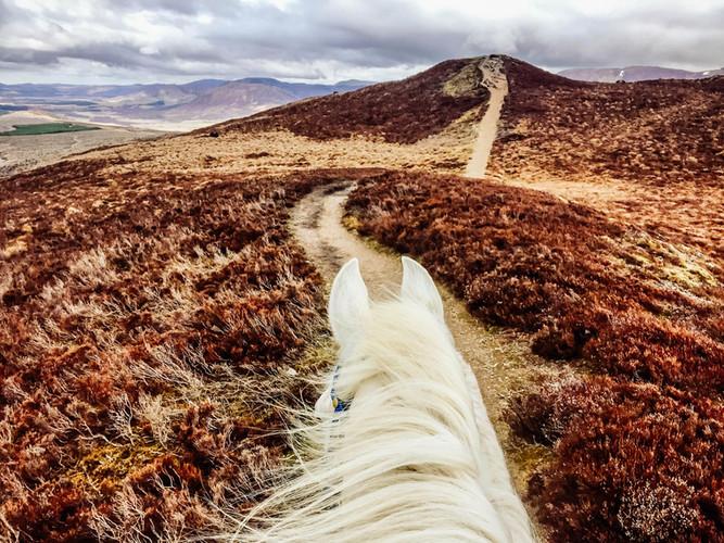 South Loch Ness trail