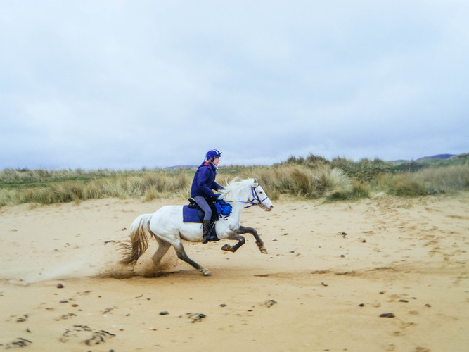 Magic galloping on the beach
